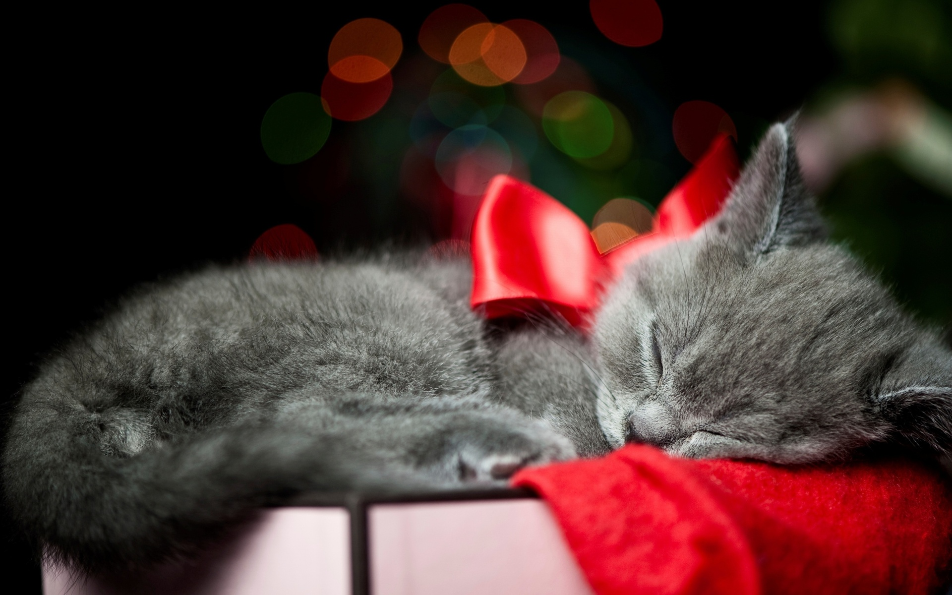 christmas bow red animals cats kittens whiskers sleep cute wallpaper 1920x1200