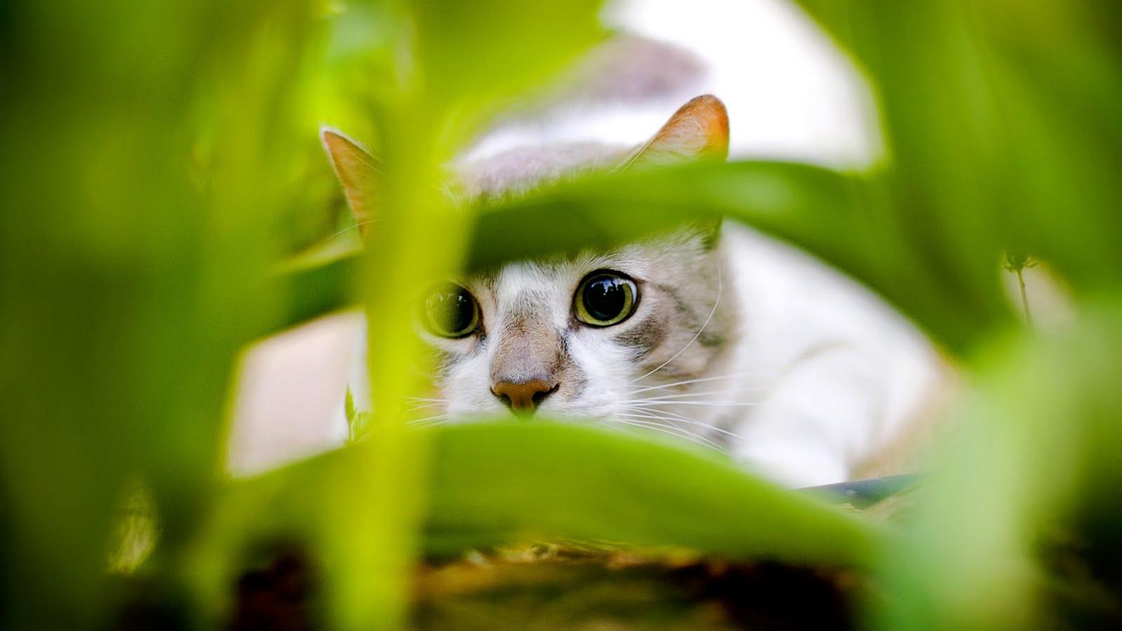 Jaspreet Rekhi 50 Beautiful Cats Full HD Wallpapers 1080prar 1600x900