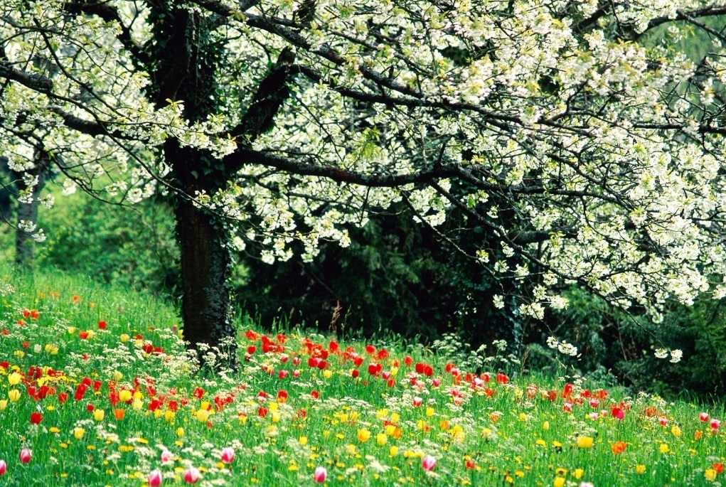 Spring HD Wallpapers Widescreen   Wallpapers 1021x685