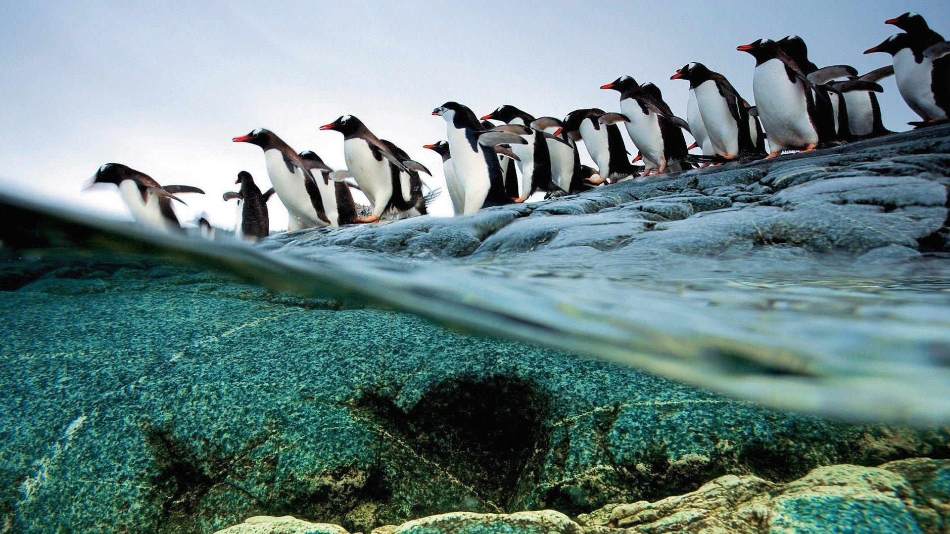 Penguin Wallpapers WallPics 1920x1080