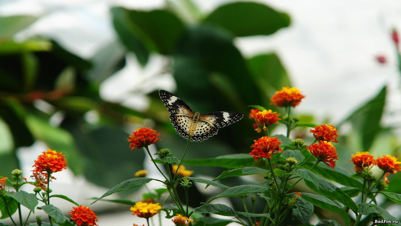 Butterfly pictures with flowers