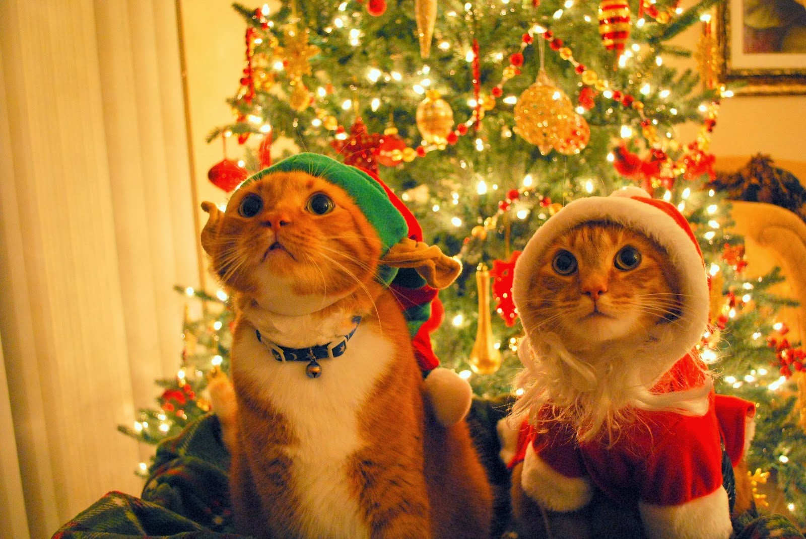 Christmas gift wallpapers and make this Cat Christmas gift wallpapers 1600x1071