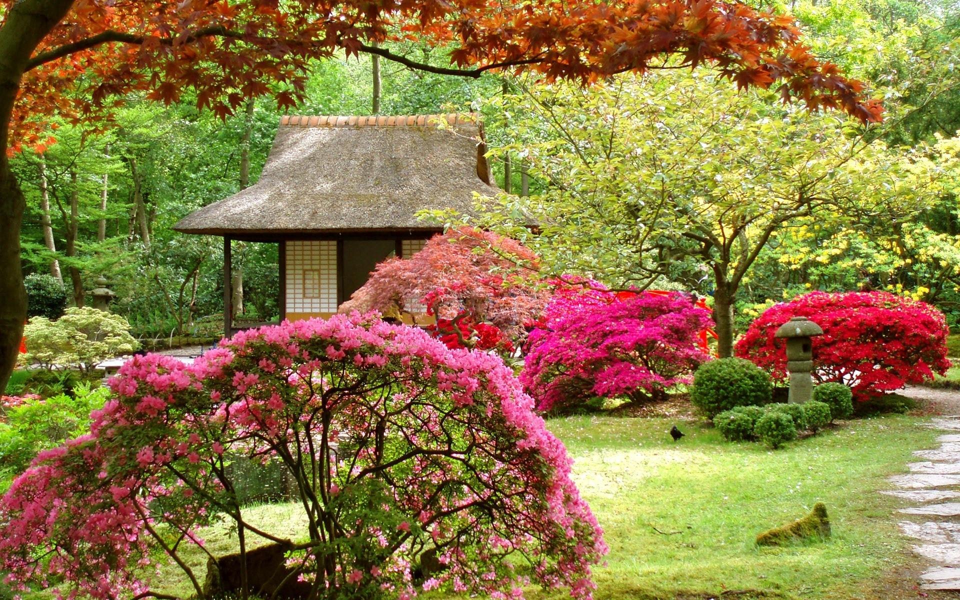 japan flowers spring japanese garden asian wallpaper background 1920x1200
