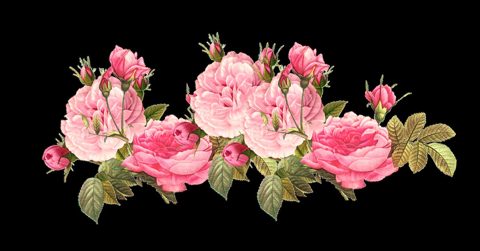 Vintage Pink Roses Background Marcos dora la exploradora png 1600x839