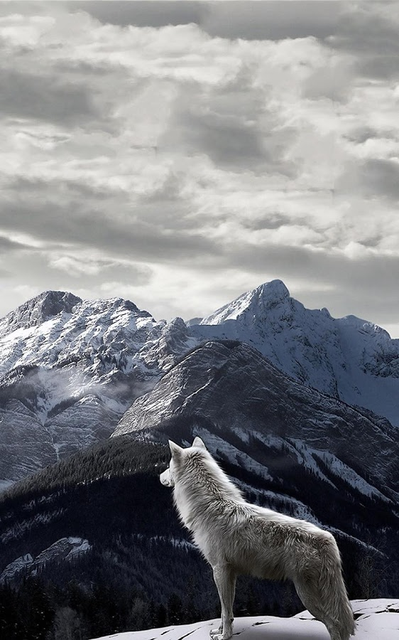 Free Download Wolf Live Wallpaper Android Apps On Google
