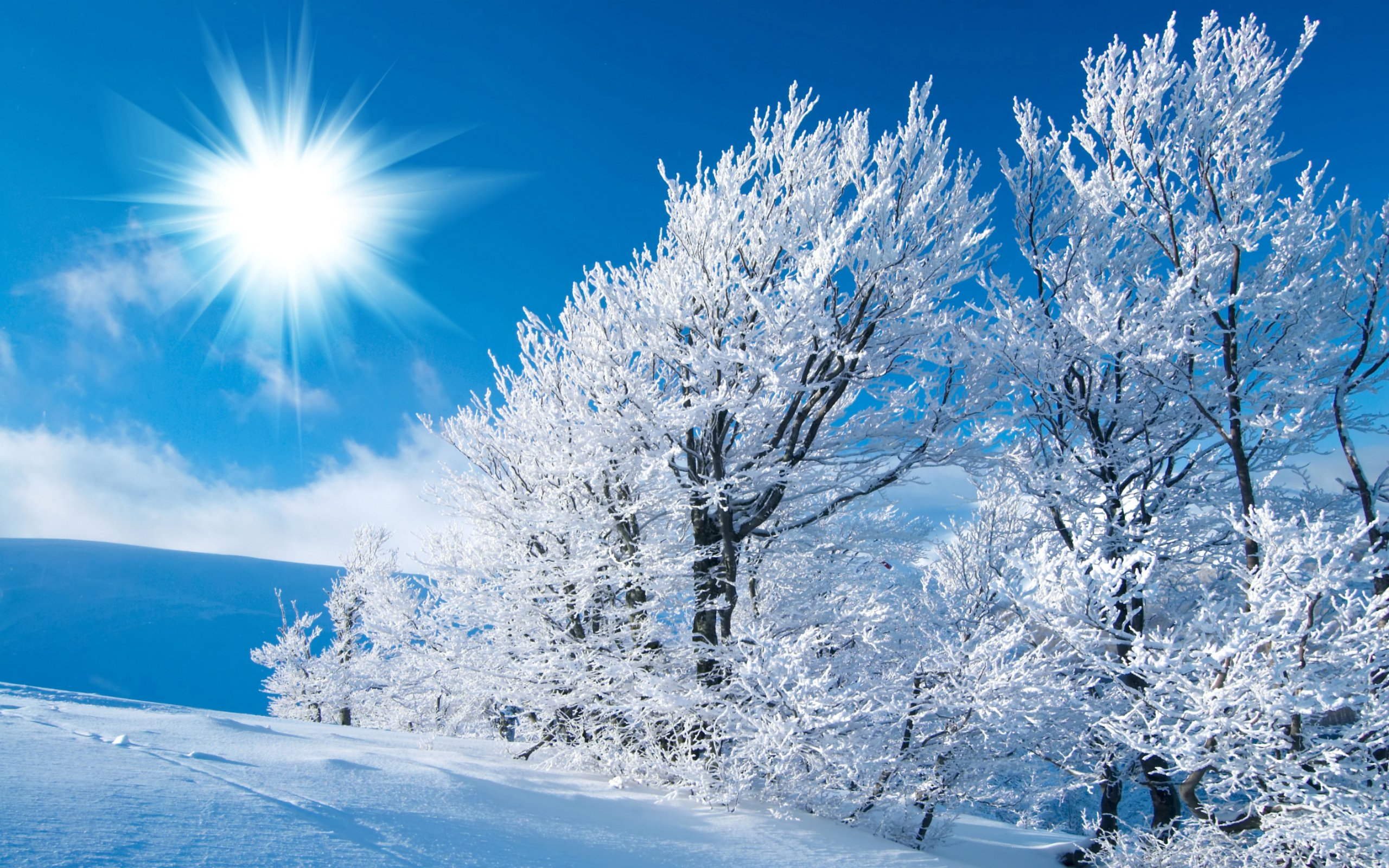 winter wallpaper snow hd wallpaper for desktop scene 2560x1600