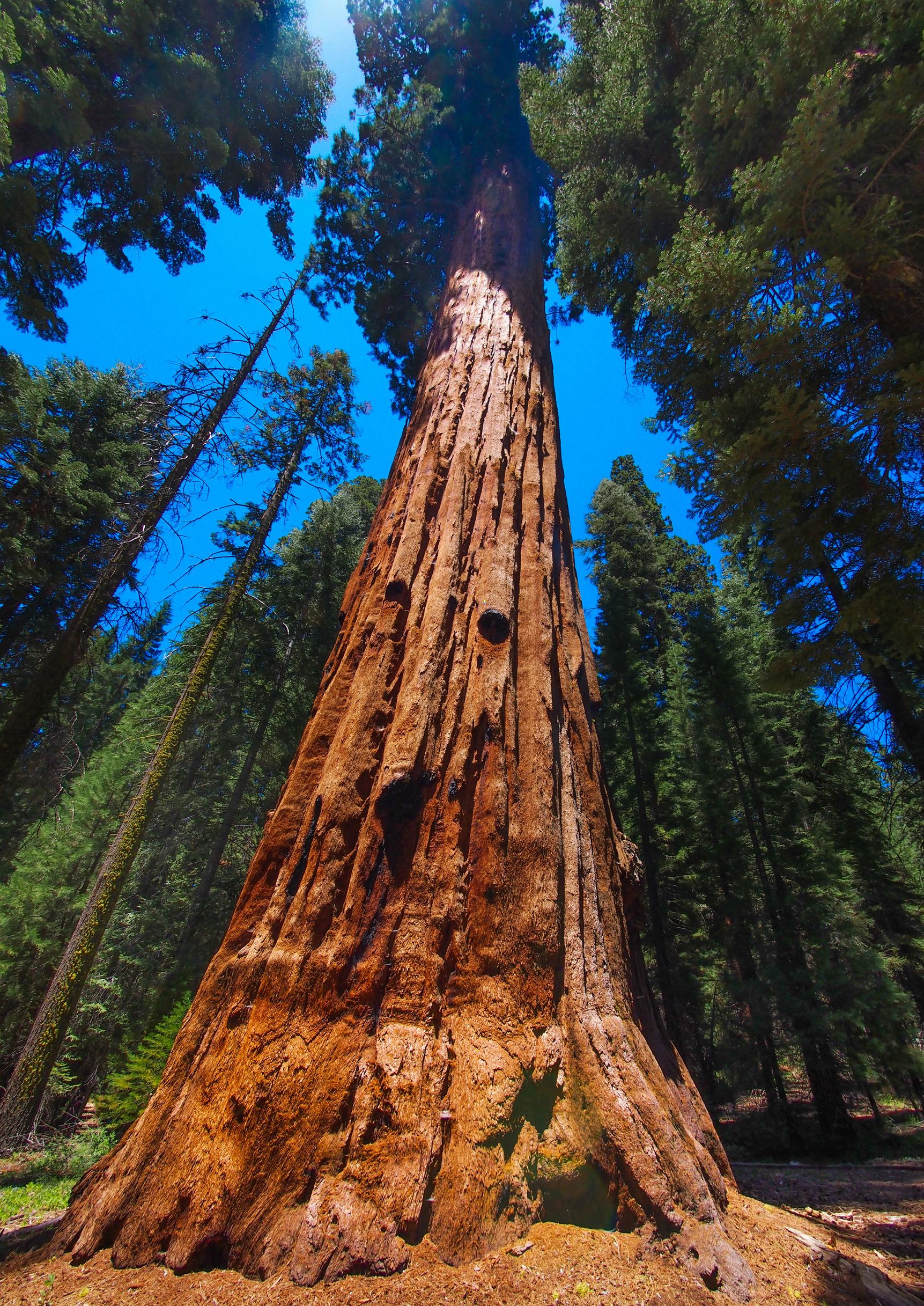 Best 54 Sequoia National Park Wallpaper on HipWallpaper 1723x2434