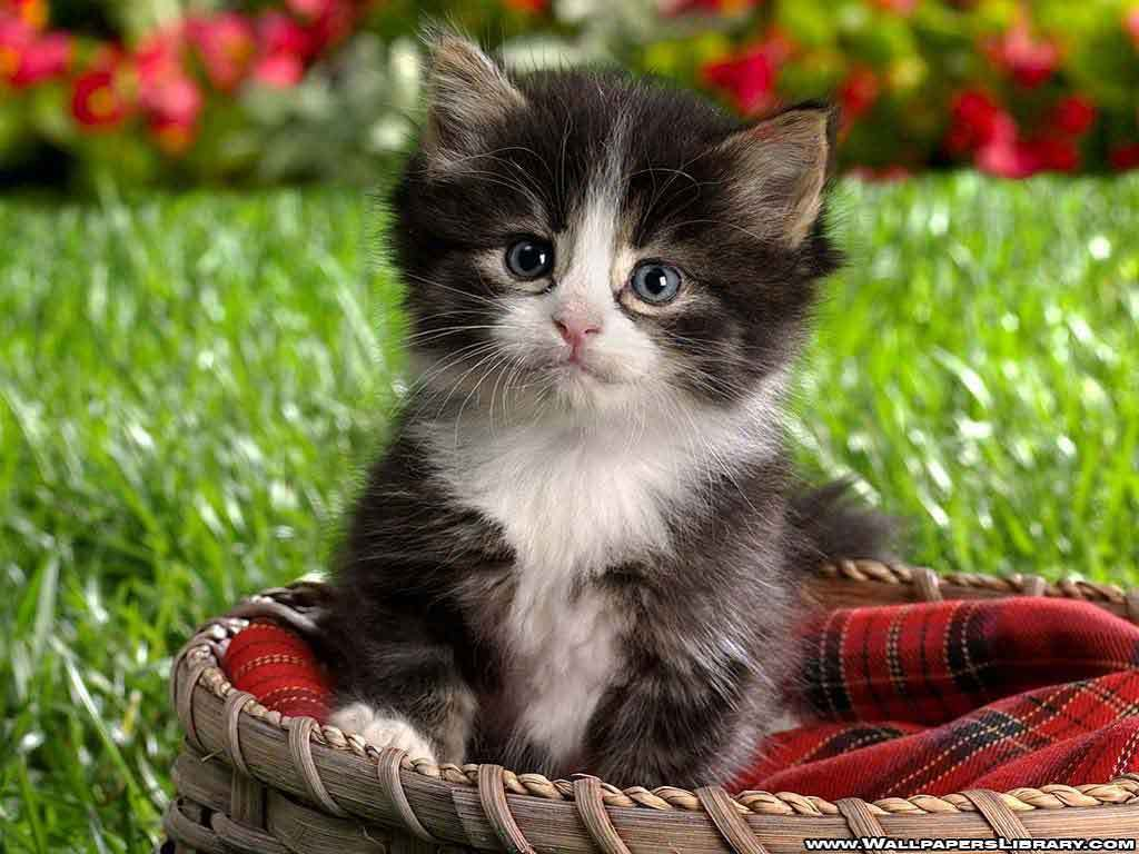 Cute Kitten Pictures 1024x768