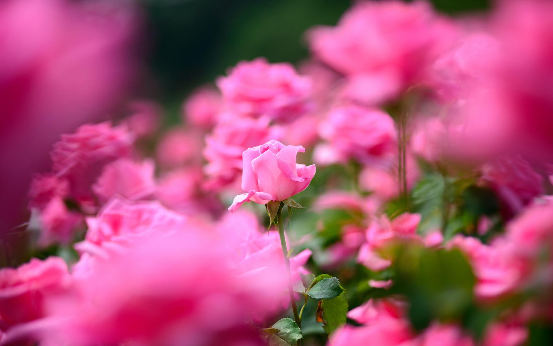 pretty flower. macro flowers wallpaper. pretty coloured flowers, Beautiful flower