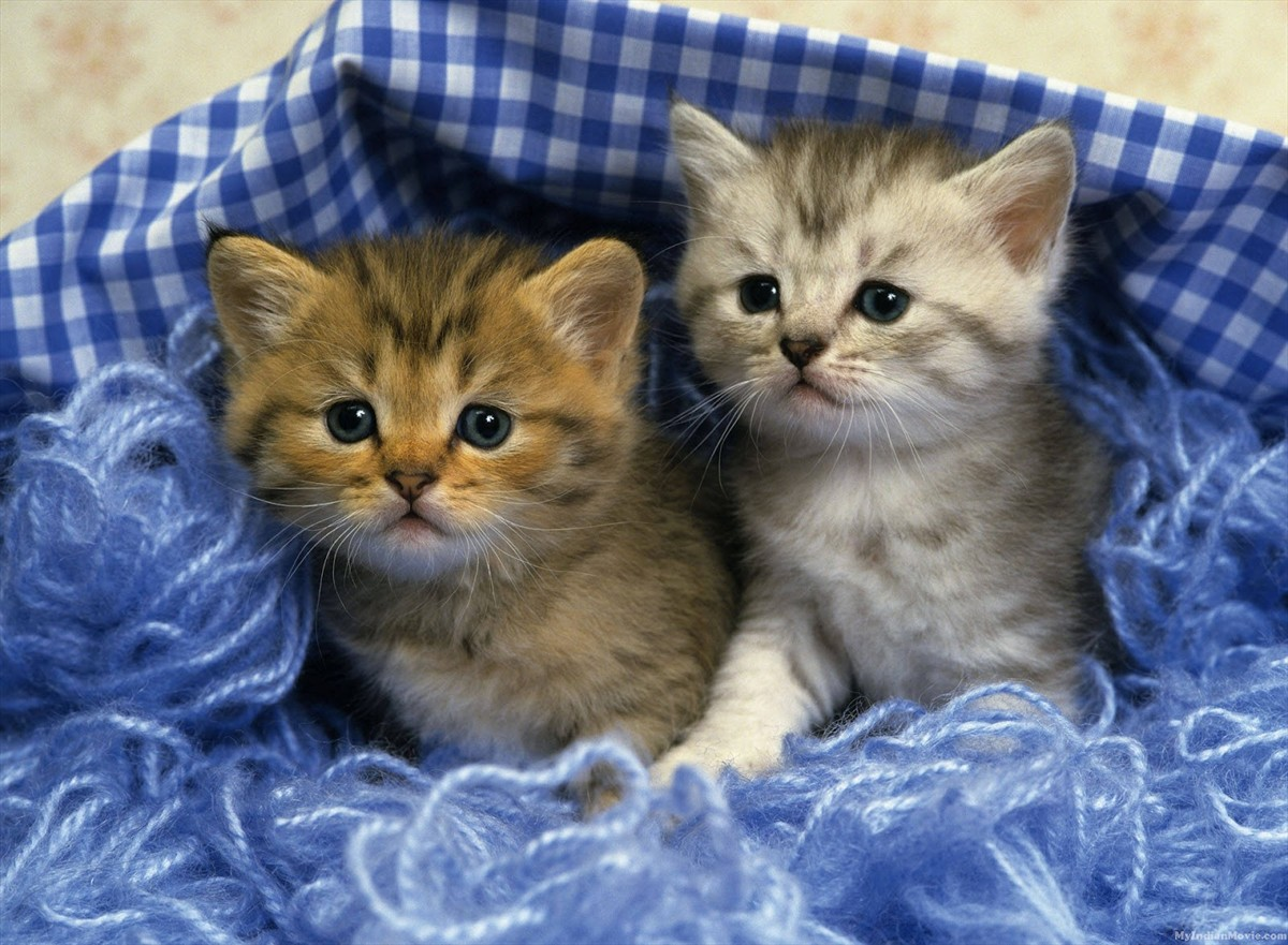 47 cute kitten wallpapers for desktop on wallpapersafari - Kitten wallpaper hd ...