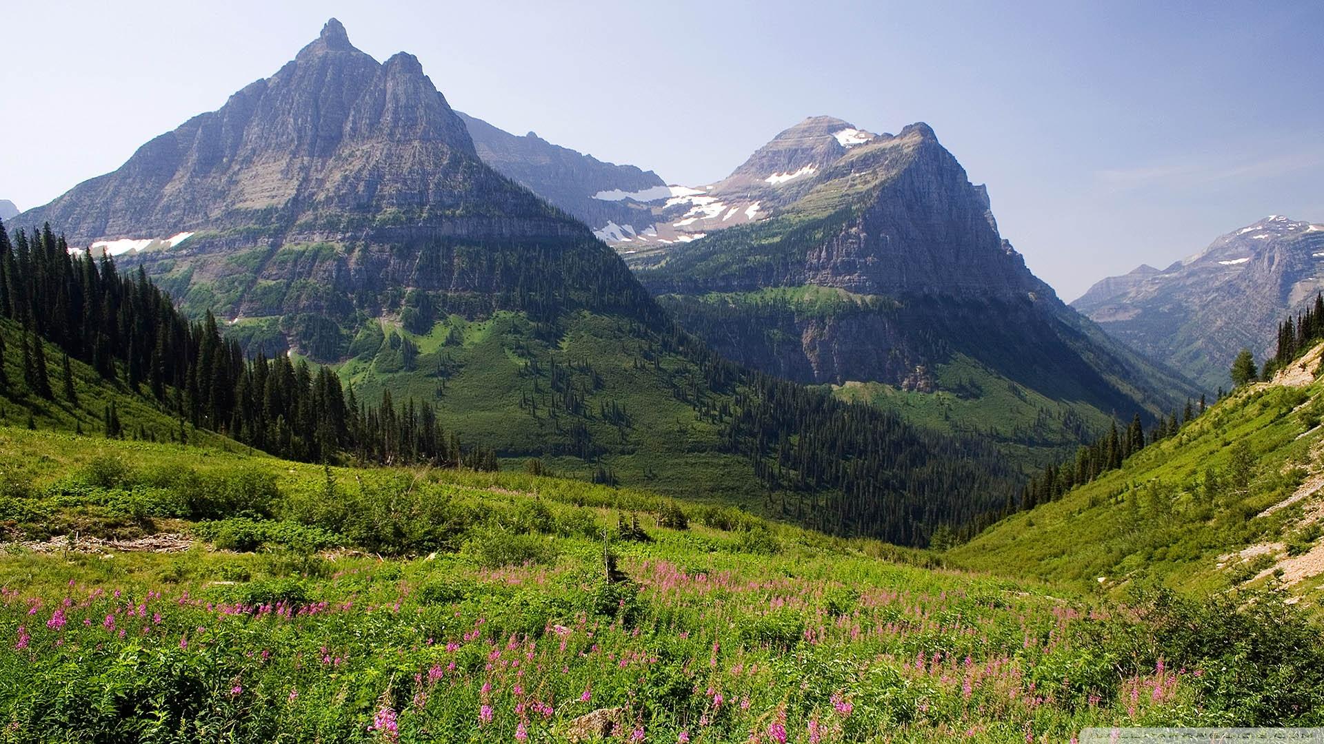 Mountain Pasture Wallpaper 1920x1080 Mountain Pasture 1920x1080