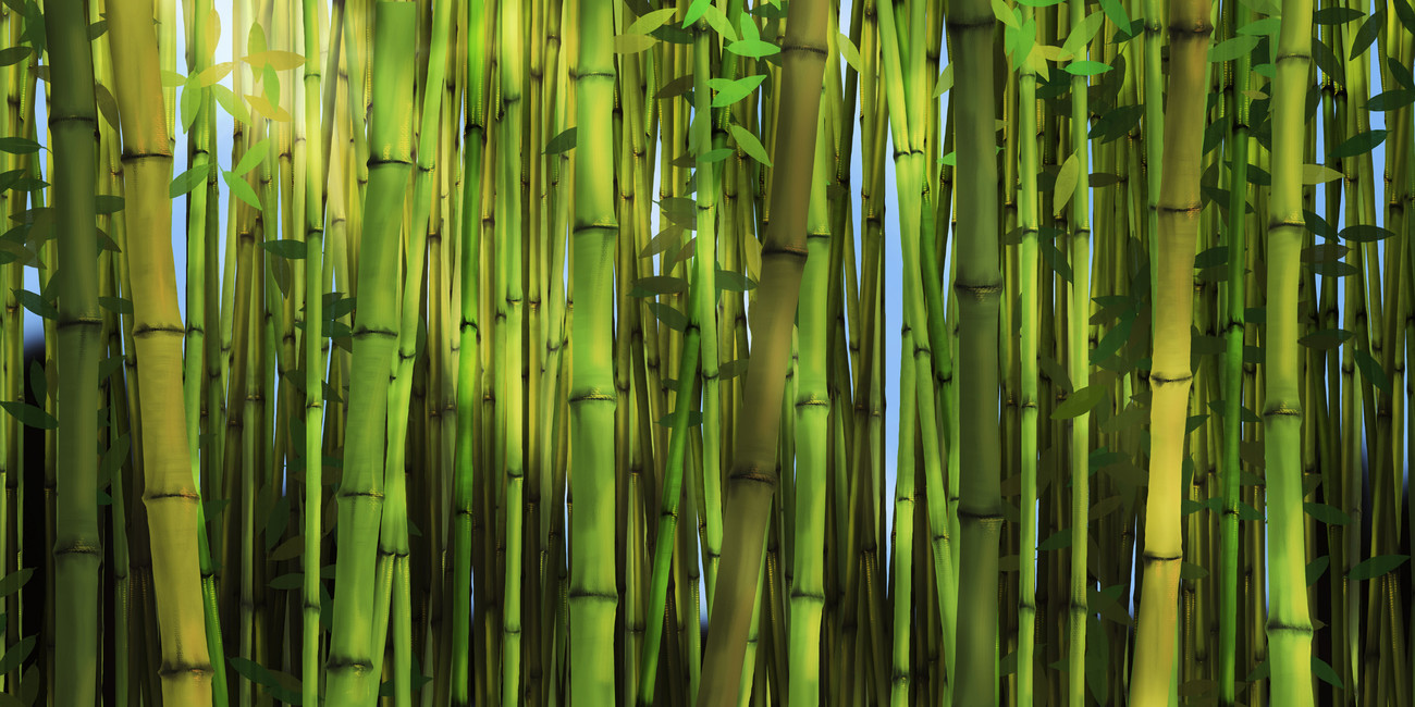 Bamboo forest wallpaper wallpapersafari for Bamboo mural wallpaper