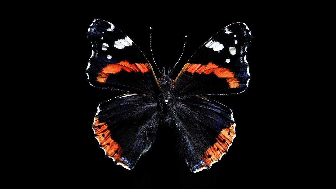 Butterfly HD Wallpapers 1366x768