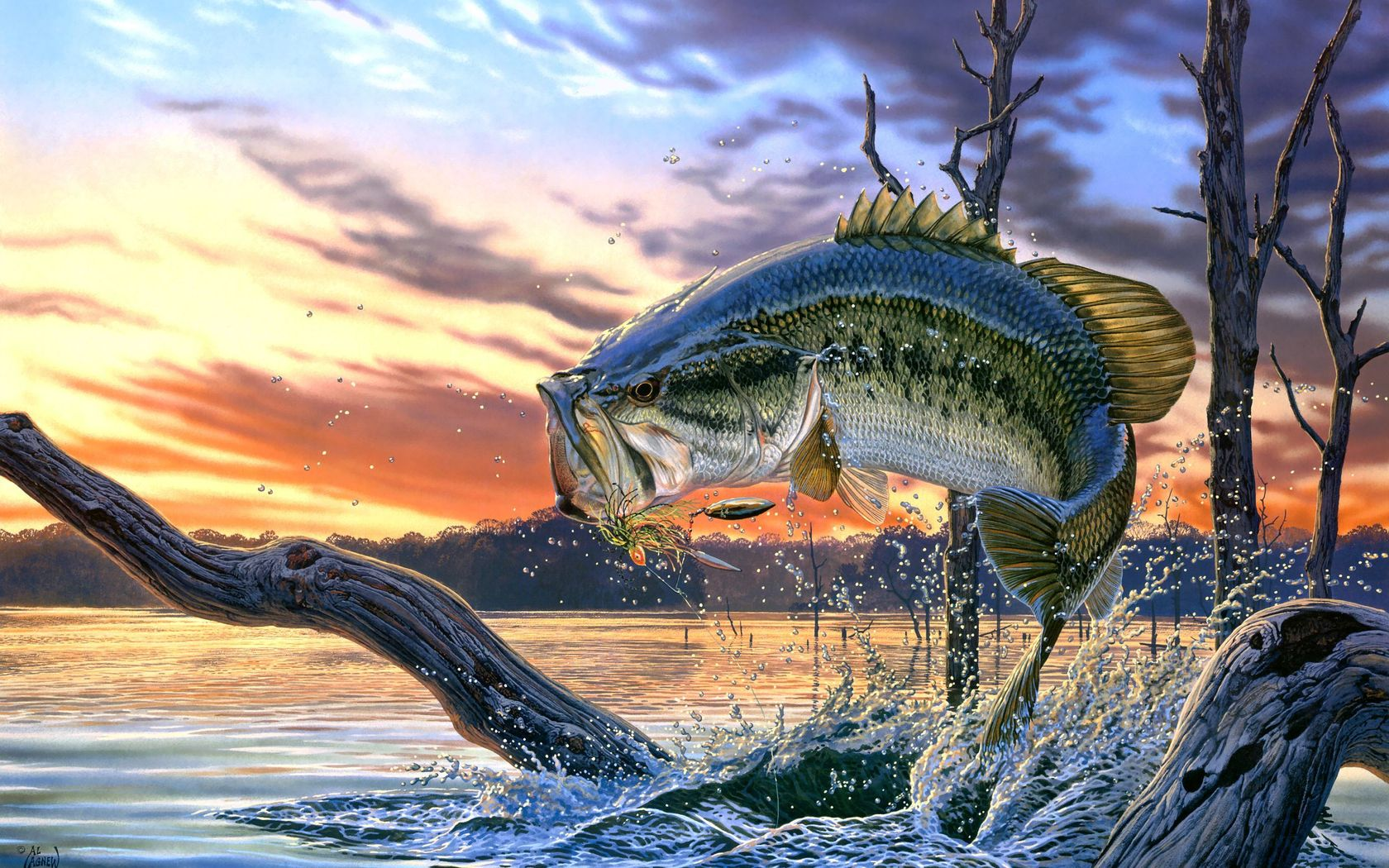 orglargemouth bass fishing wallpaper background screensaver 1680x1050