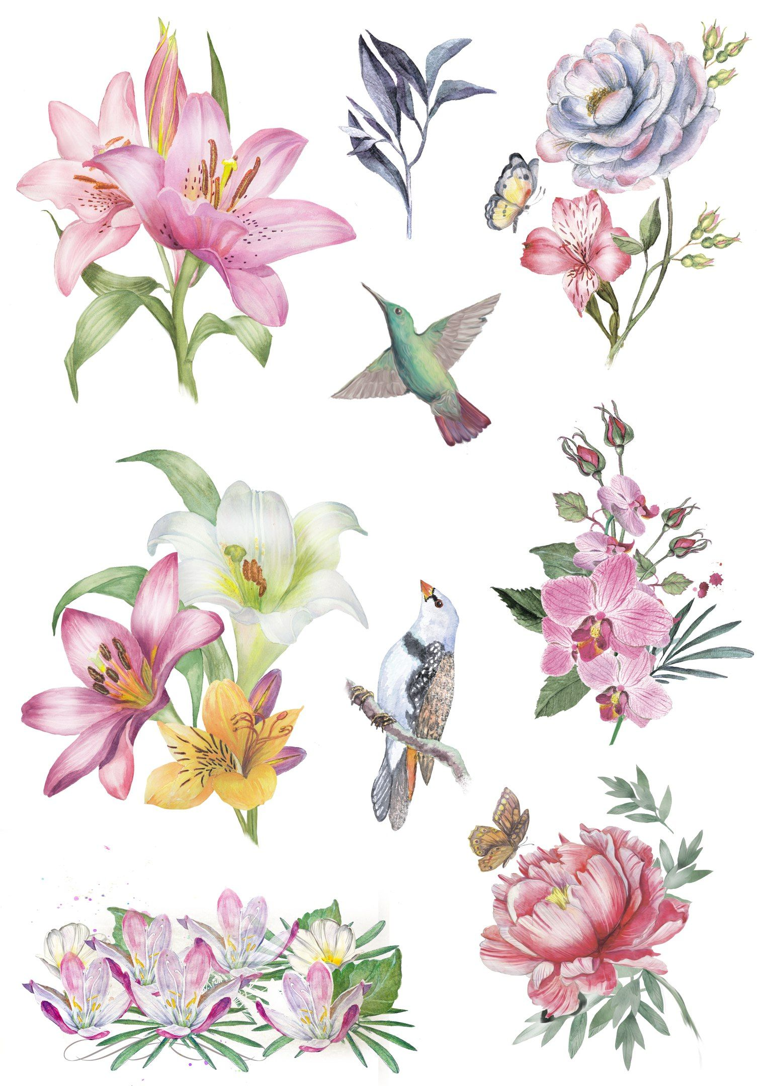 Pin by Cheryl Carey Bass on Clippy   Other Flower images 1517x2160
