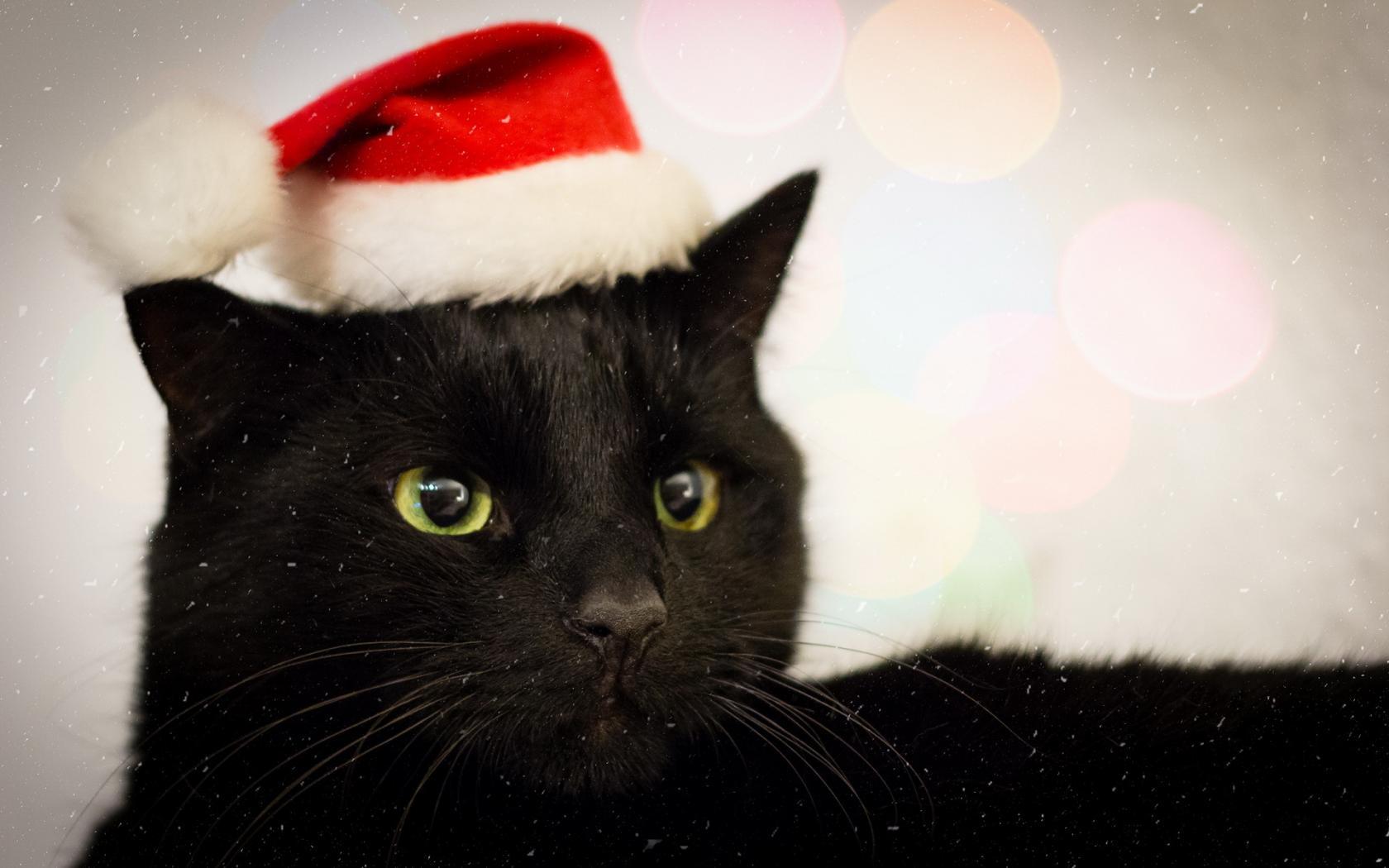 black cat christmas wallpaper wallpapersafari
