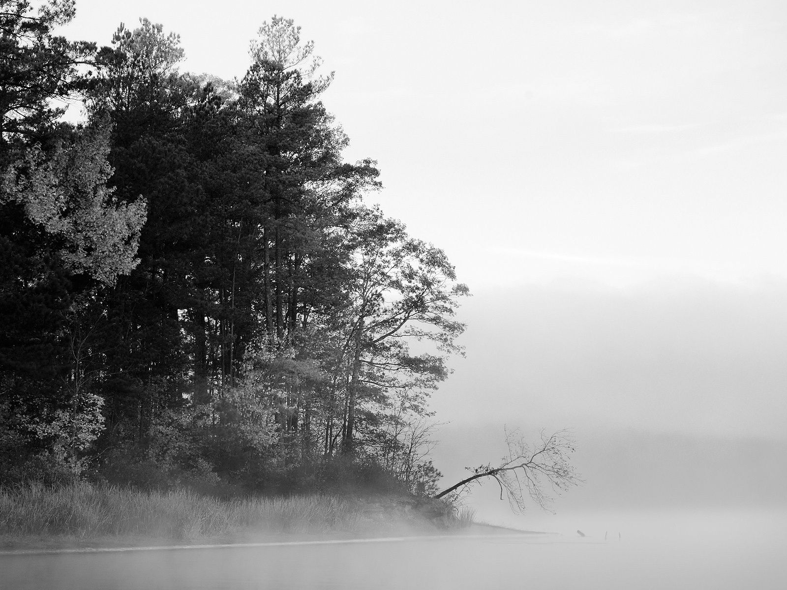 Foggy Lake Black And White Nature 1600x1200