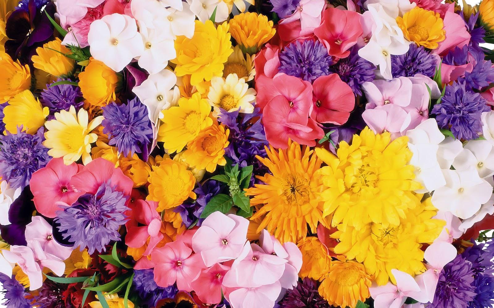 Best Flower Wallpapers For Desktop Wallpapersafari