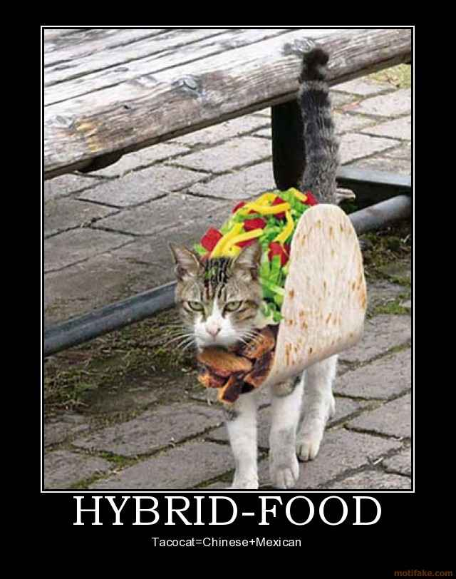 food tacocat chinese mexican demotivational poster tags taco cat 640x812