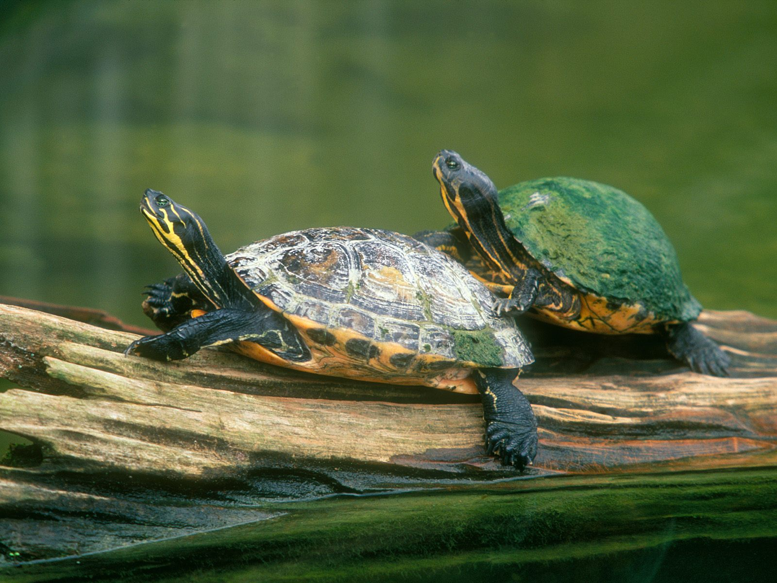 Turtles Photos HD Wallpapers Download Wallpapers in HD for your 1600x1200
