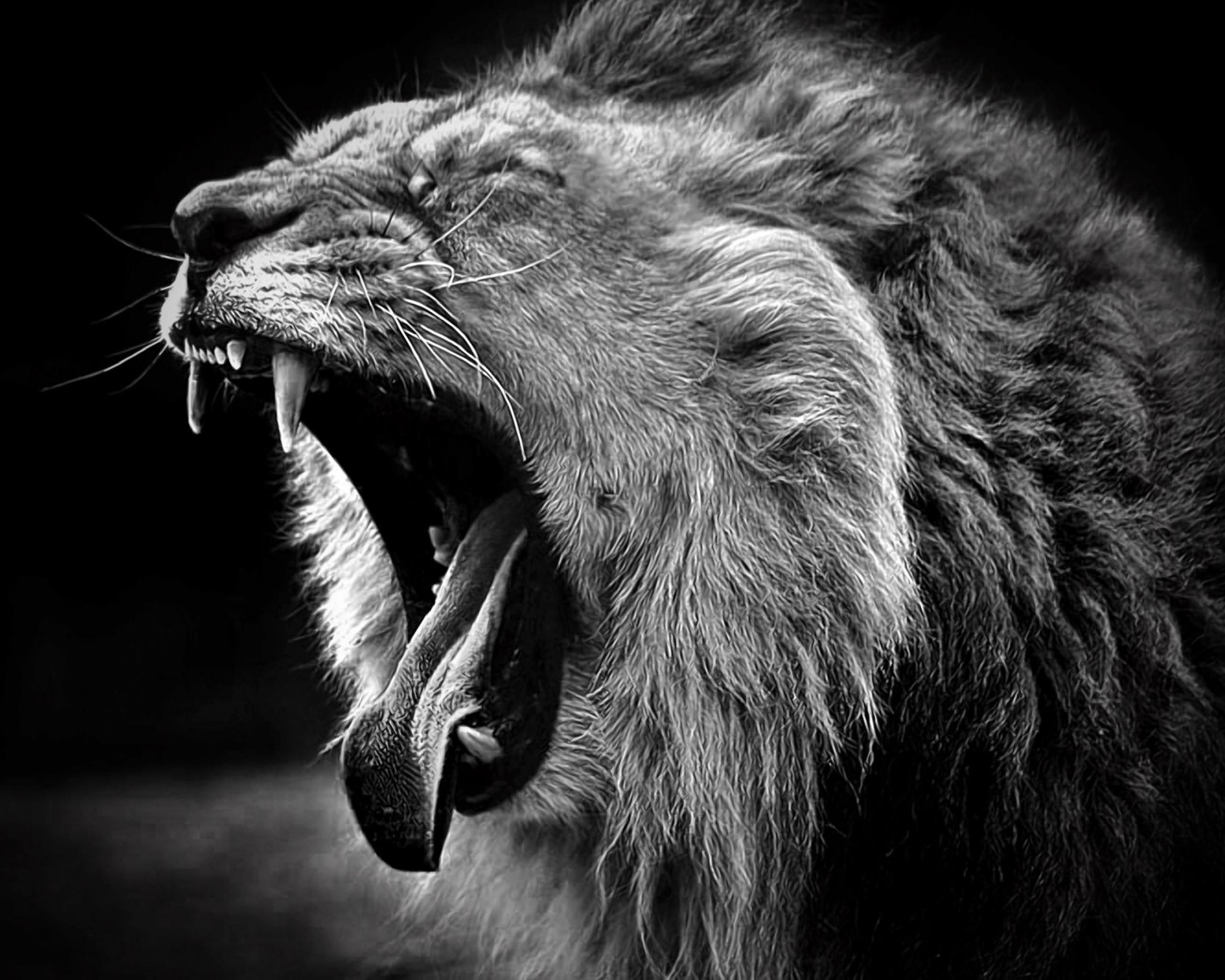 black and white animal photo Wallpapers Lion Animals Black And 2560x2048
