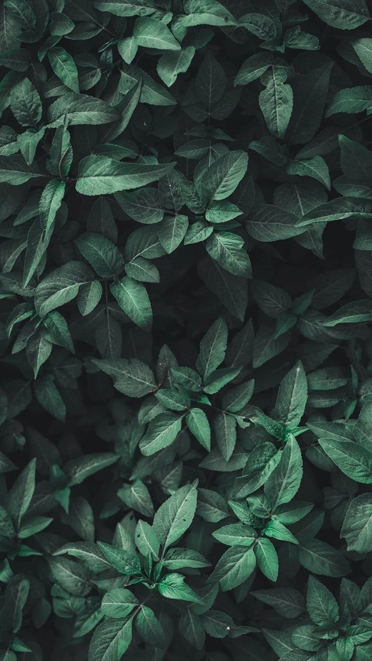 Green Aesthetic Green Aesthetic Leaves Nature Wallpaper   Pattern 750x1333