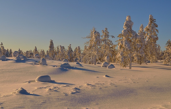 Wallpaper trees snow winter sunny day wallpapers nature   download 596x380