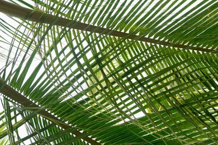 Palm Leaves Wallpaper Removable Wallpaper for sale in Richmond 700x467