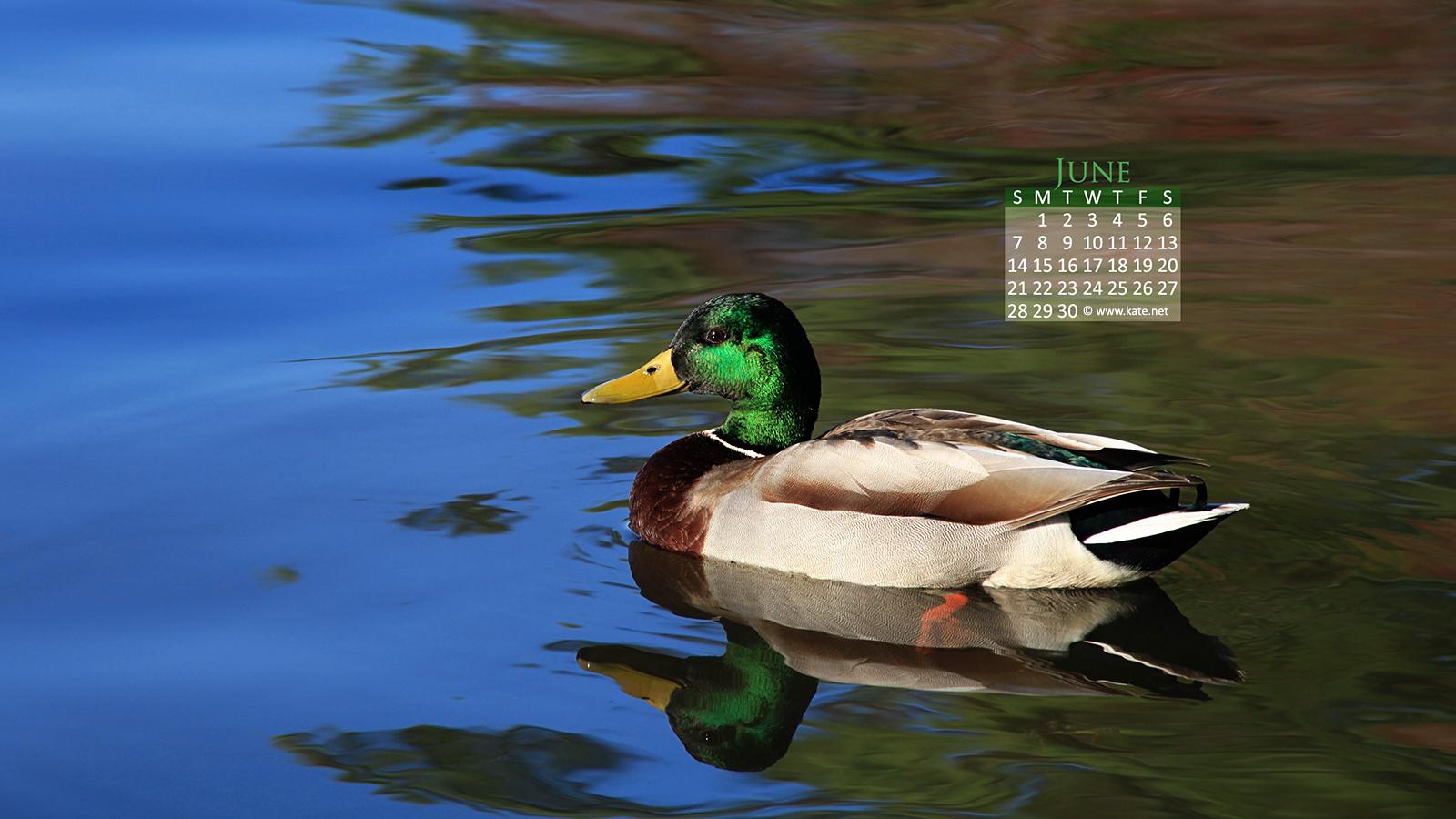 Calendar Wallpapers Desktop Wallpapers by Katenet 1600x900
