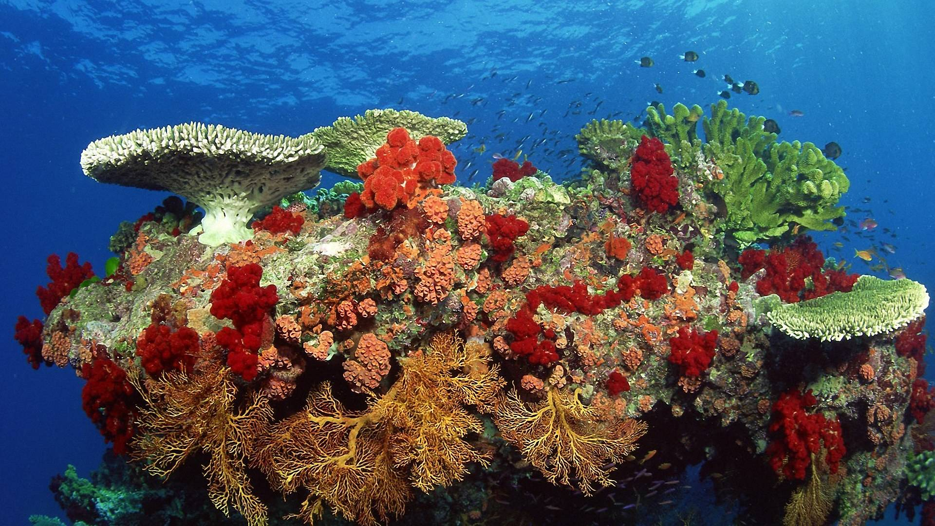 Coral Reef HD Wallpapers 1920x1080