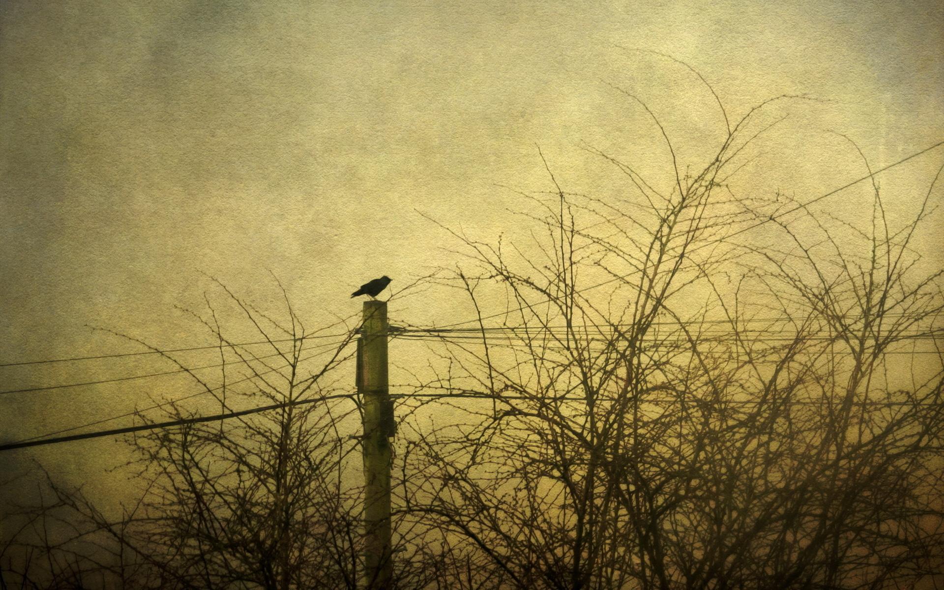 animals birds crows raven retro sepia cross trees lines sky gothic 1920x1200