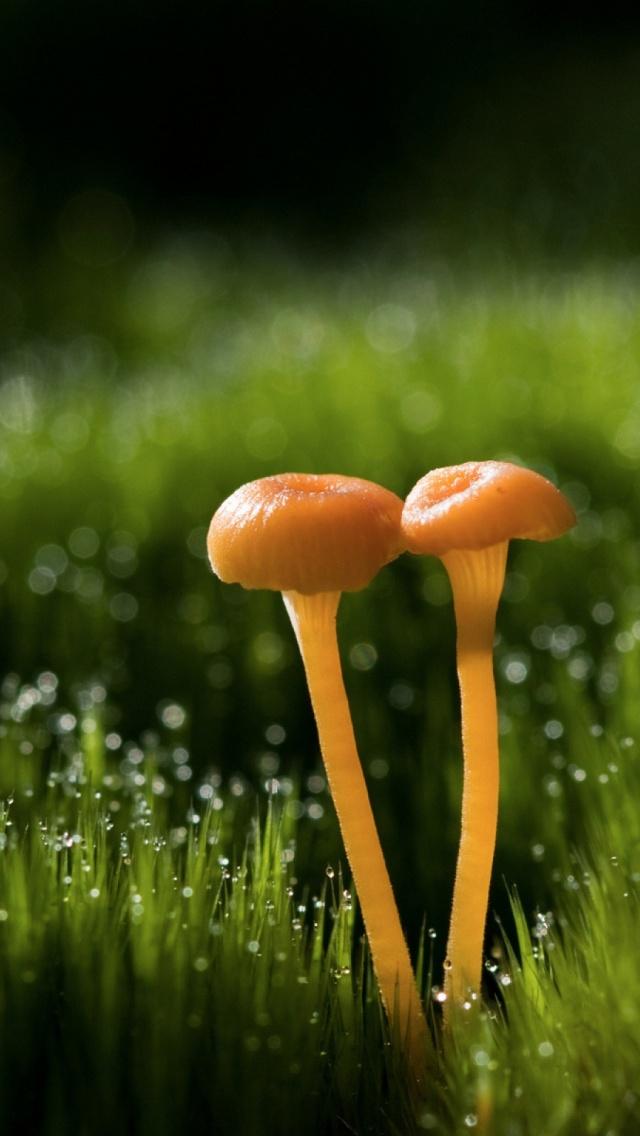 Mushroom iPhone 6 iPhone 6 S Plus Wallpaper 640x1136