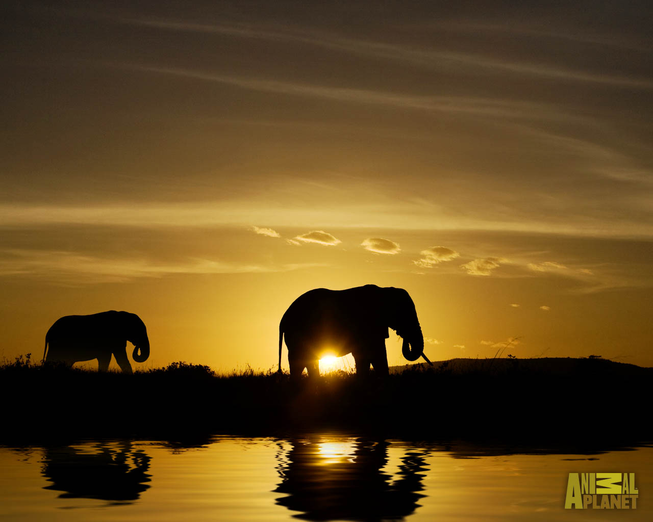 Animal Planet Wallpaper Download   elephant sunset 1280x1024