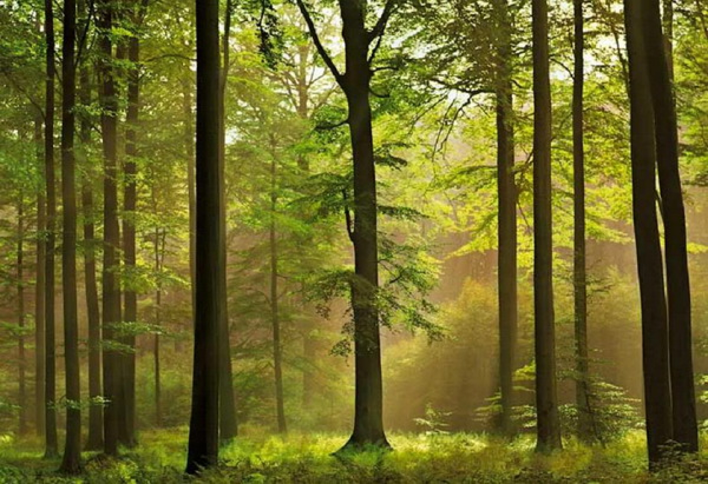 16921 wallpaper mural in forest theme traditional wallpaper versus 1440x986