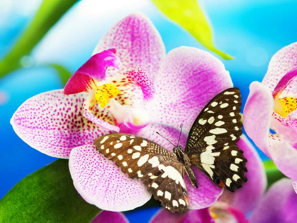 Butterfly Wallpapers 1024x768