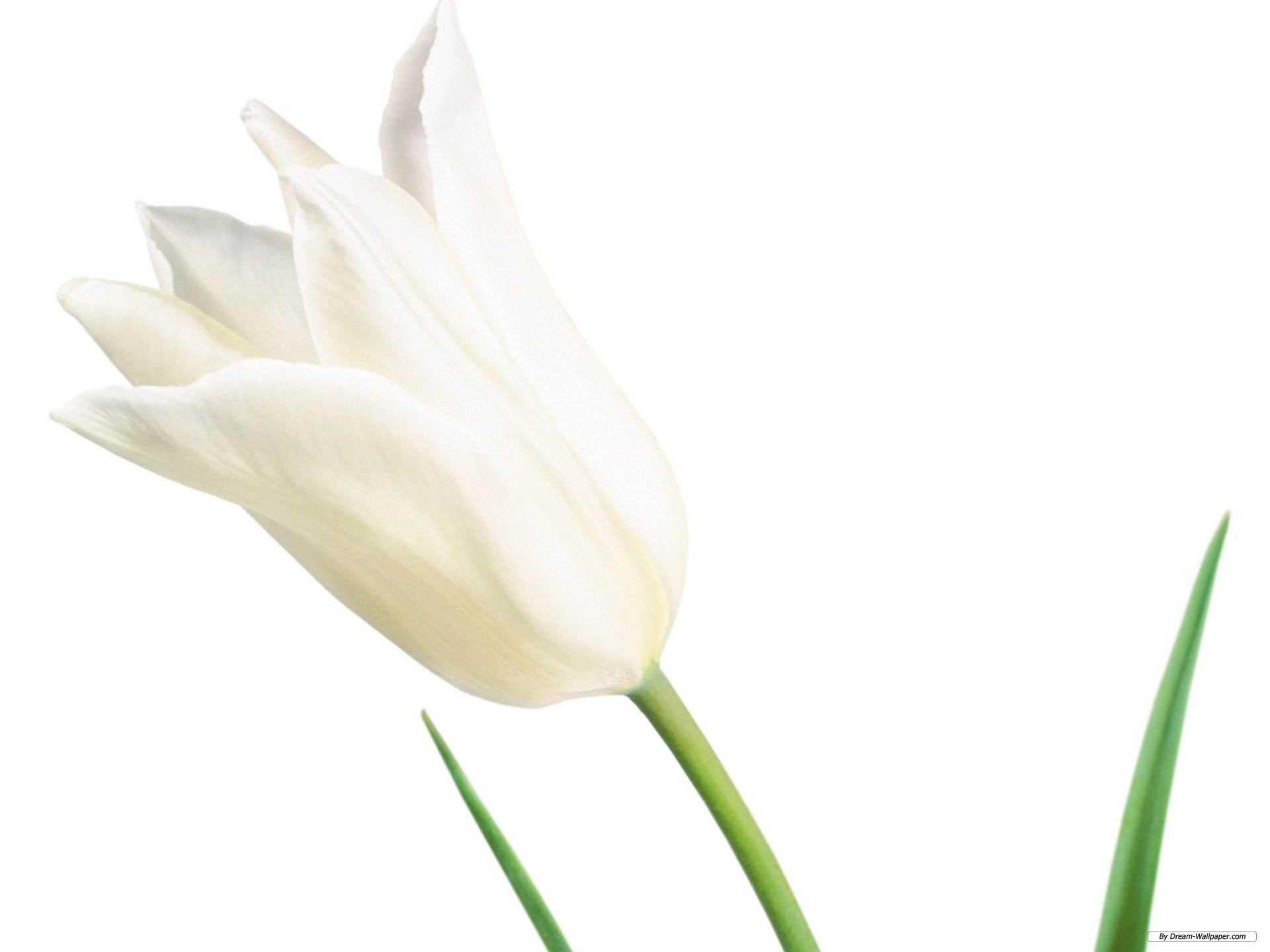 White Floral Wallpaper Wallpapersafari