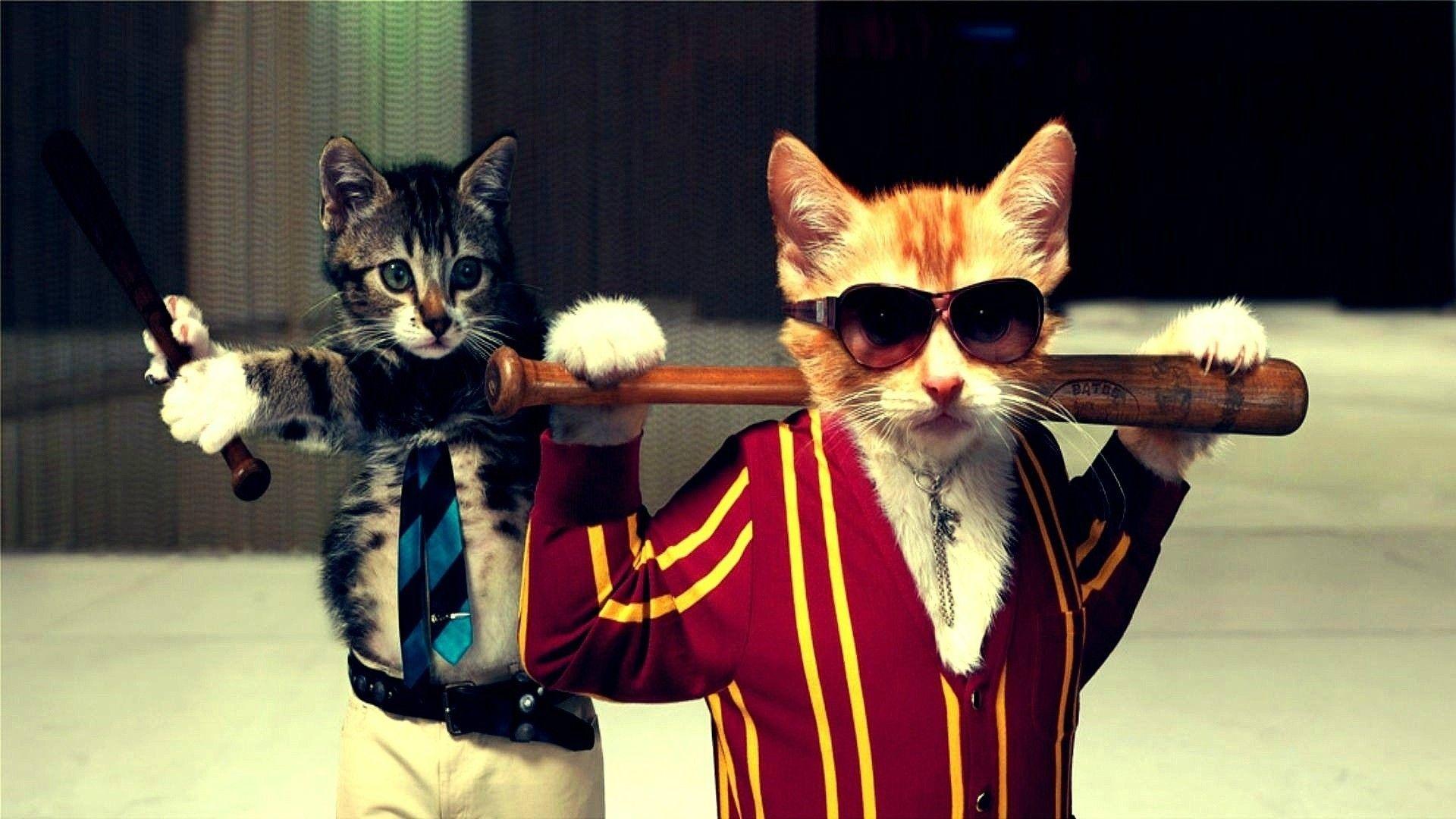 29 Cool Cats Wallpapers On Wallpapersafari