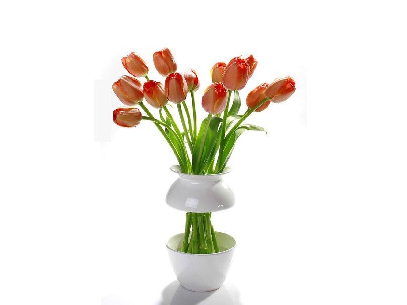 Flowers Vase wallpaper   ForWallpapercom 808x606