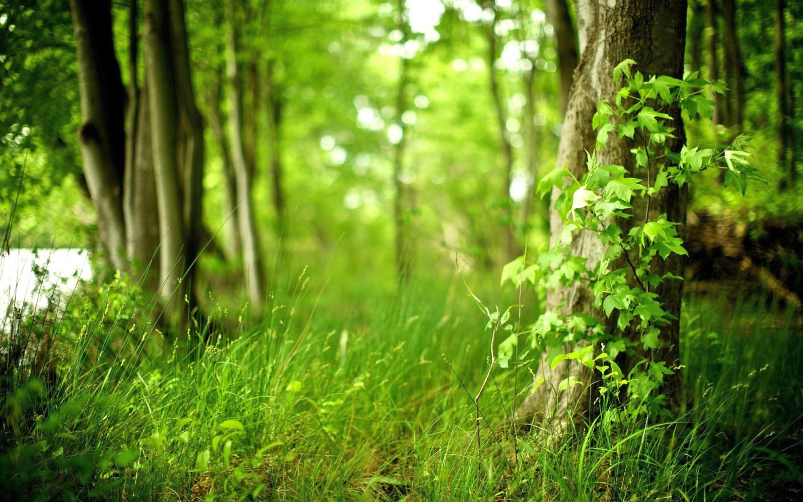Green and beautiful wallpapers of Green Forest in 1024800 to 2560 1600x1000