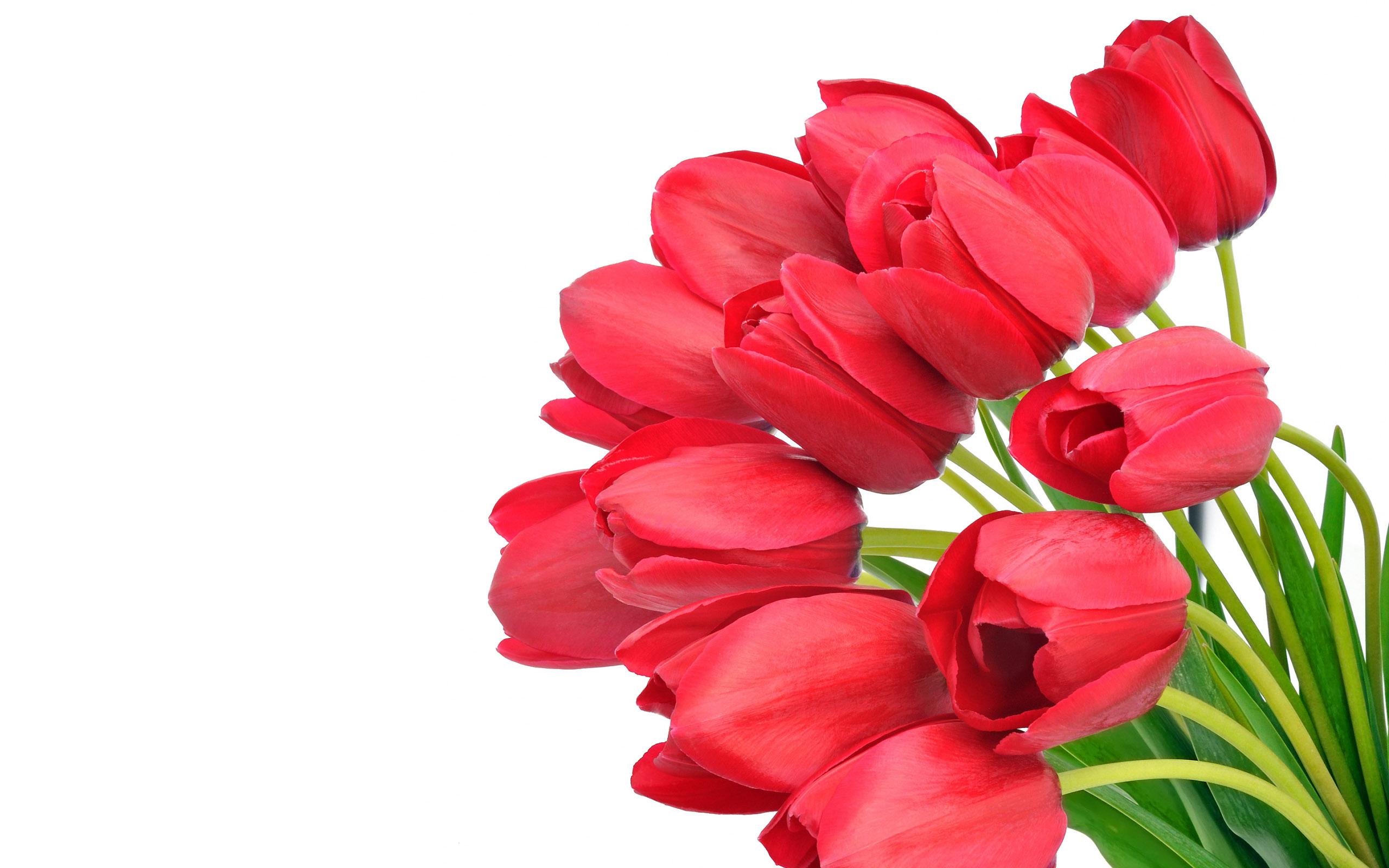 <b>Tulip Bouquet Flowers</b> Wallpaper <b>HD</b> For Desktop and Mobile