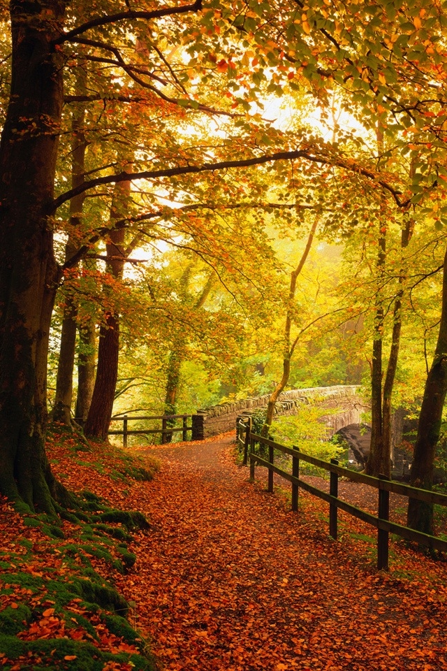 Iphonehdwallpapercomnaturegold Autumn Iphone Hd Wallpaper 640x960