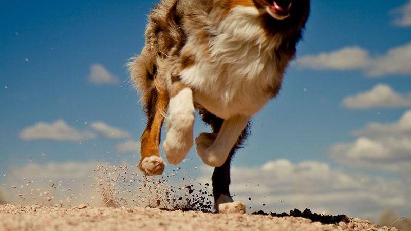 dogs running 1920x1080 wallpaper Animals Dogs HD Desktop Wallpaper 800x450