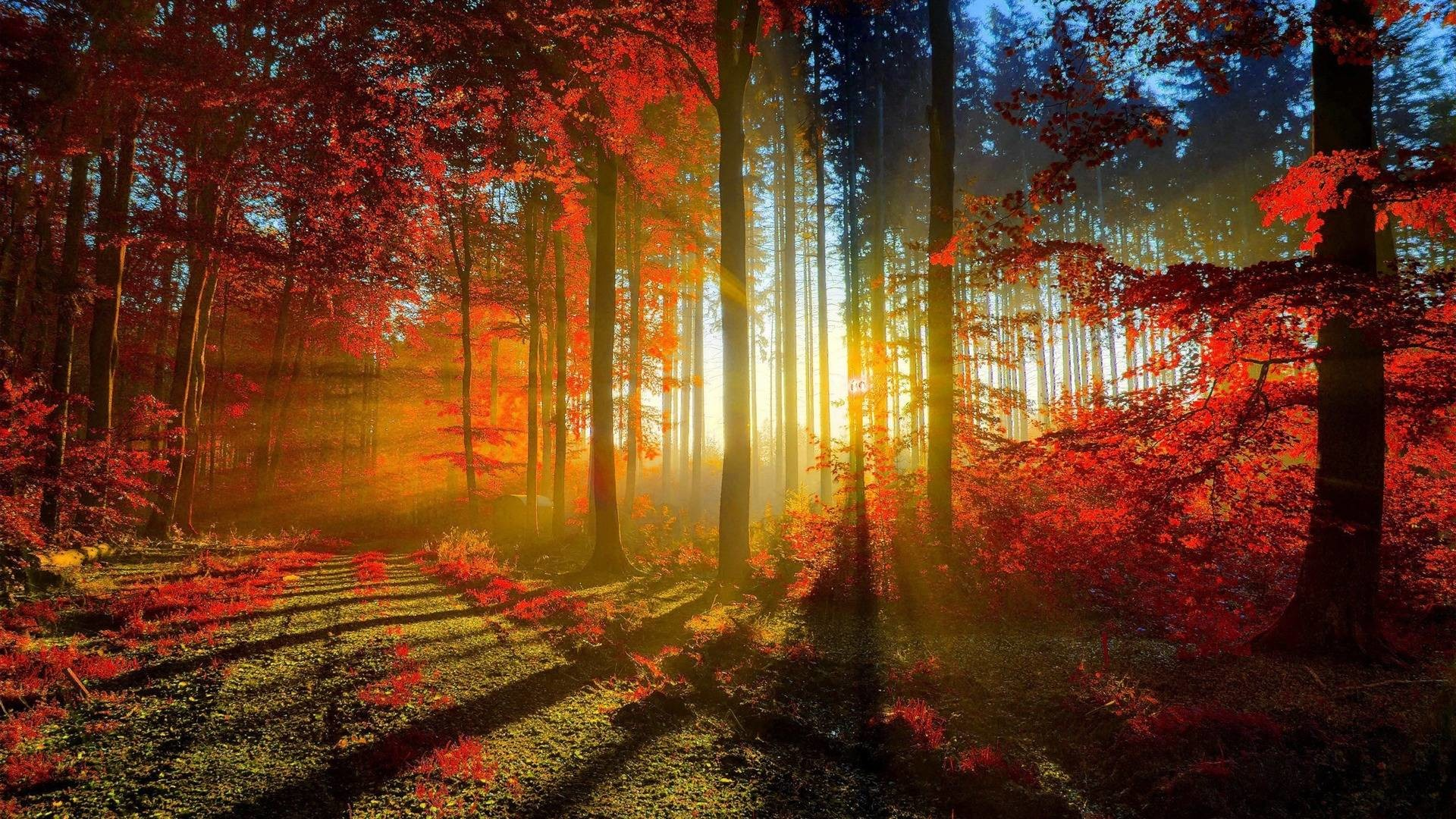 download 69 Fall Screensavers Wallpapers on WallpaperPlay 1920x1080