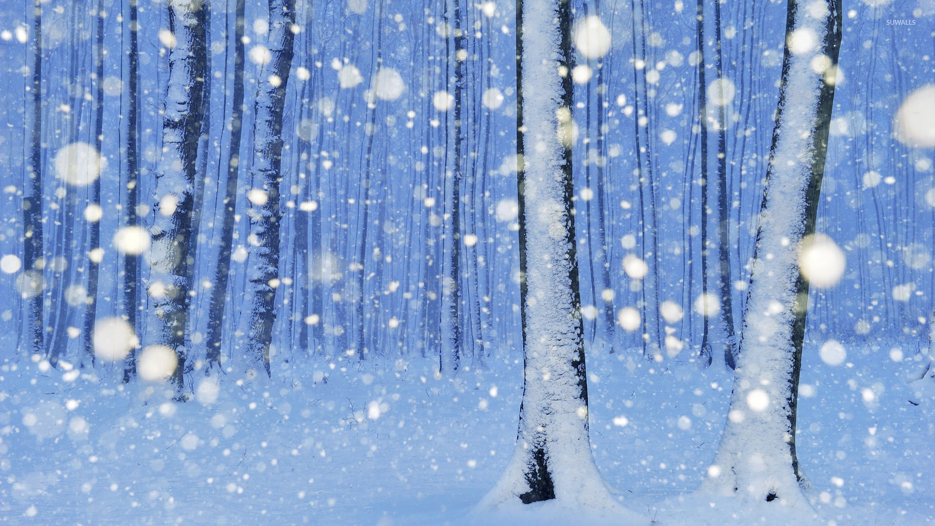 Snowy trees wallpaper   Artistic wallpapers   16322 1920x1080