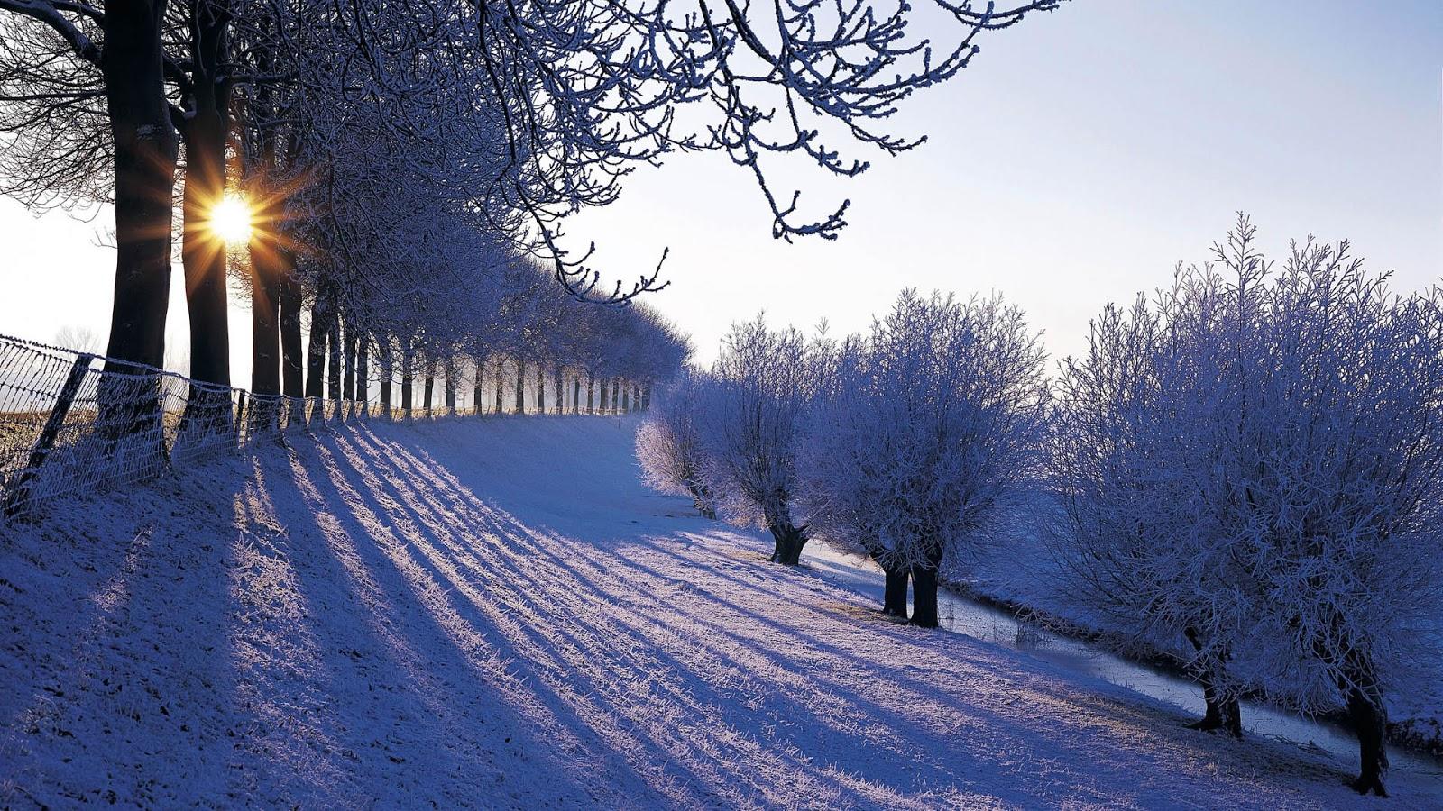 scenery winter wallpaper winter snowfall beautiful wallpaper beauty of 1600x900
