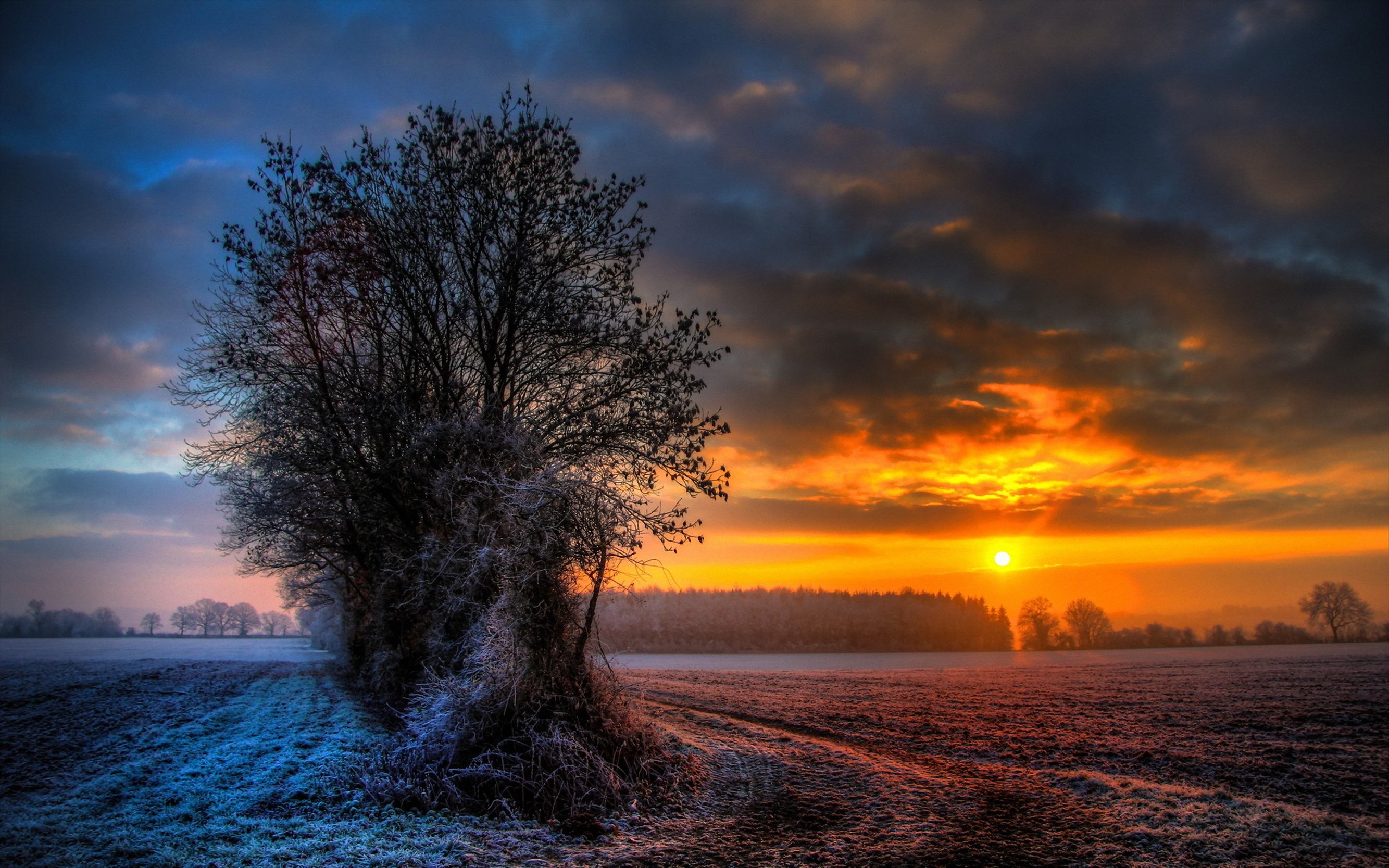 Snow covered tree wallpapers and images   wallpapers pictures photos 2667x1667