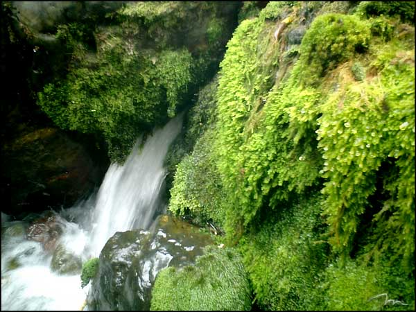 mossy image search results 600x450