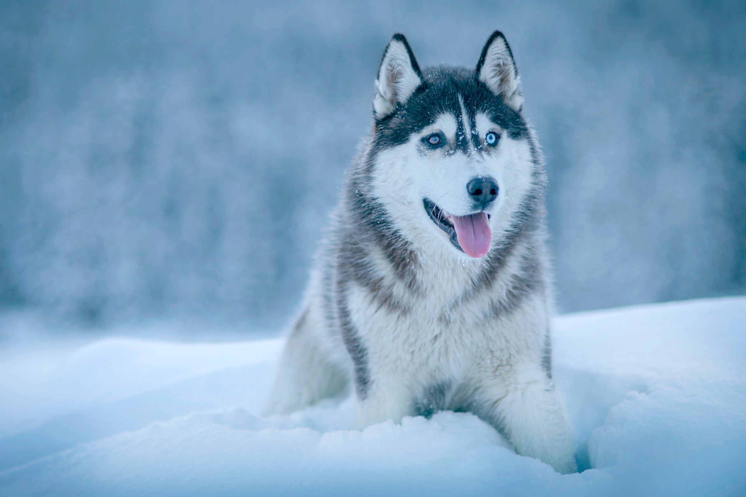 Winter Dog Snow HD Wallpapers Download 2560x1706