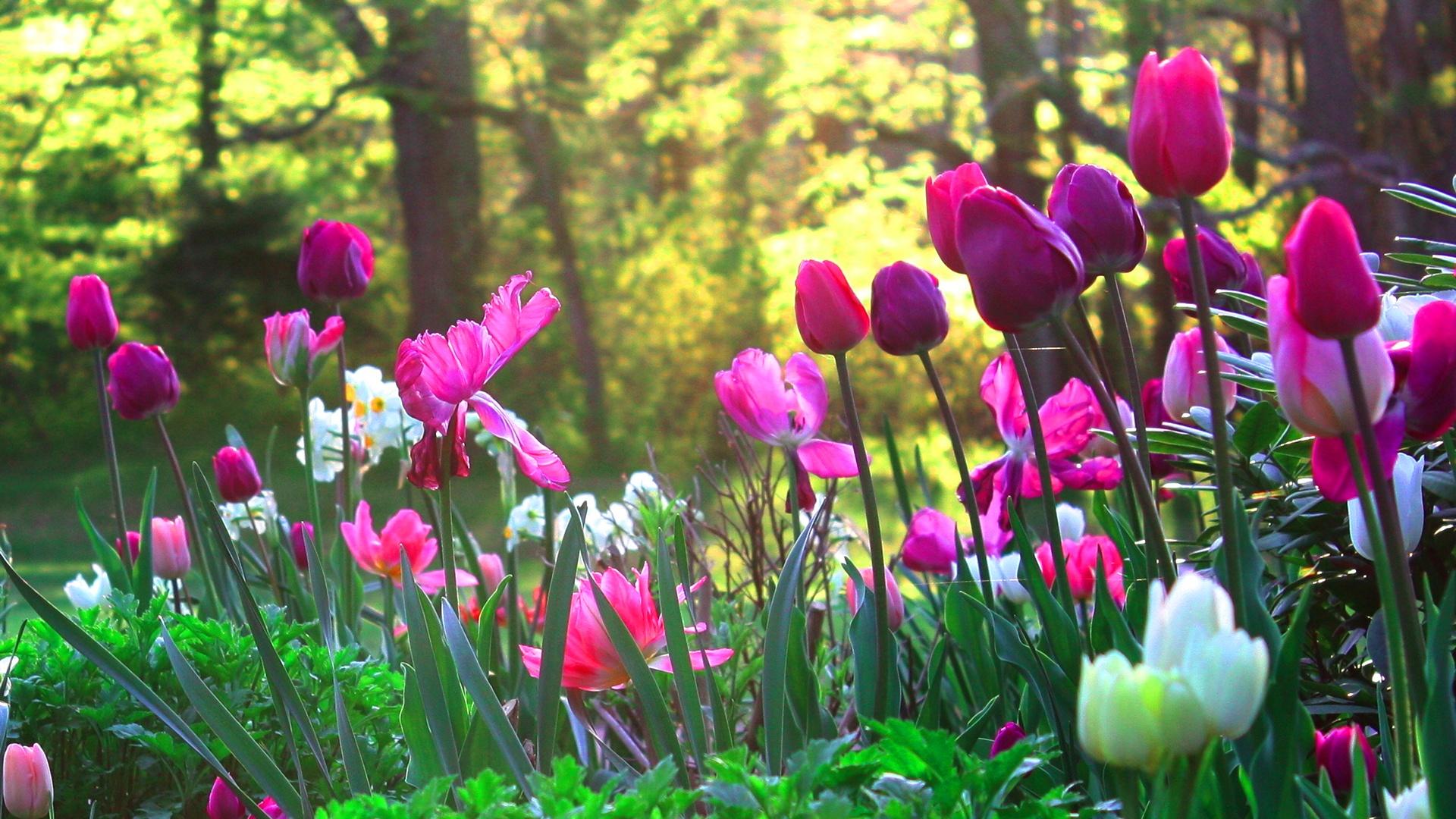 Flower Garden Wallpaper High Resolution images 1920x1080