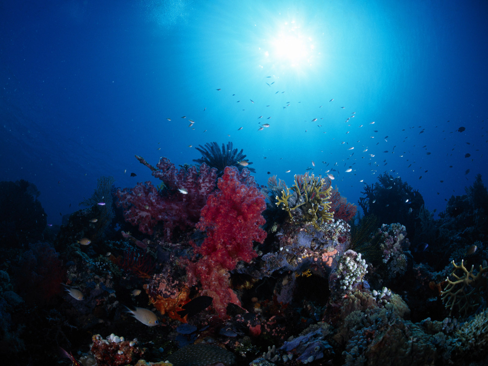Deep Blue Sea Wallpapers Backgrounds Desktop Wallpapers 1600x1200